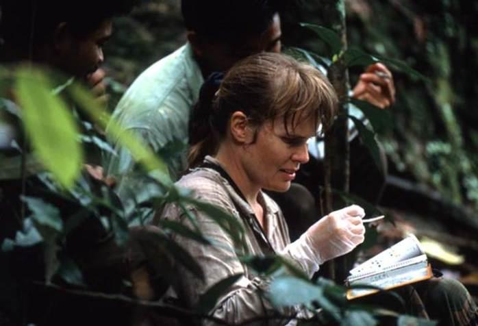 Cerryl Knott melakukan Penelitian orangutan di TNGP