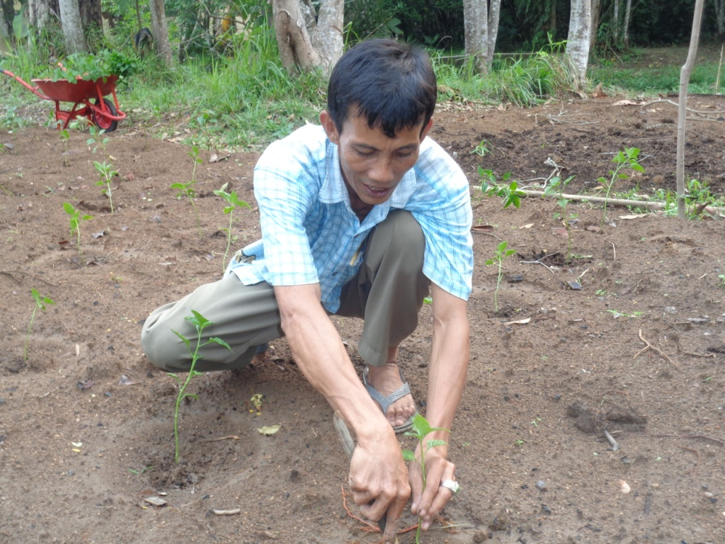 Perkebunan dilahan Bentangor (2)