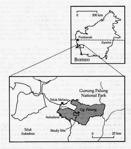 peta tn gunung palung