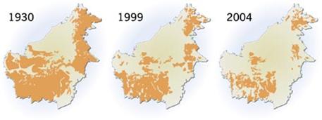 Sejarah Habitat Orangutan Kalimantan