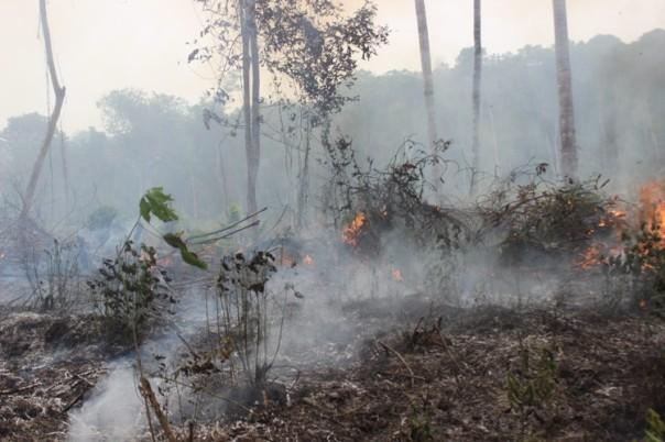 kobaran api di wilayah kecamatan sungai laur yg dijumpai, diperkirakan untuk perladangan atau perkebunan. foto dok. Ranti YP