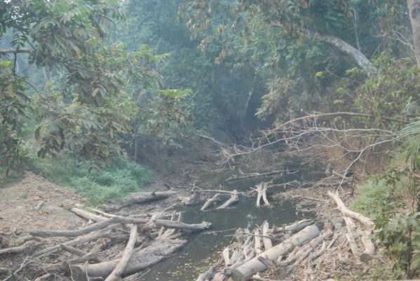 Persediaan sumber air semakin krisis berpengaruh pada biota sungai. foto dok. Edward Tang YP