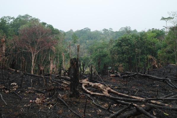 Sisa-sisa pembakaran utk peladangan masyarakat. foto dok. Edward Tang YP