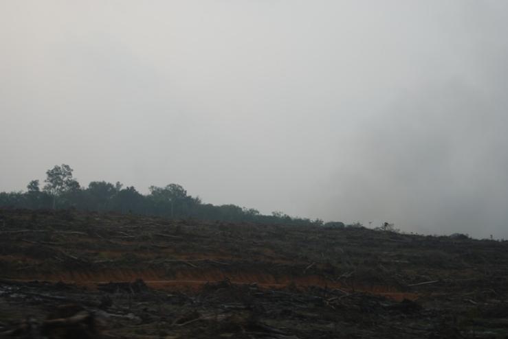 Sisa-sisa pembersihan lahan (land clearing)