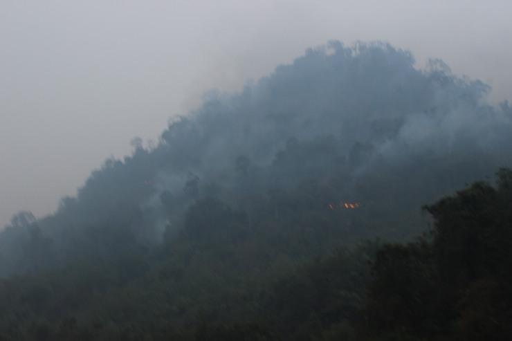 Hutan terbakar di Matan jaya_foto 1