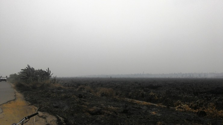 Kebakaran yg terjadi di Desa Pelang. dok. MRA/YP