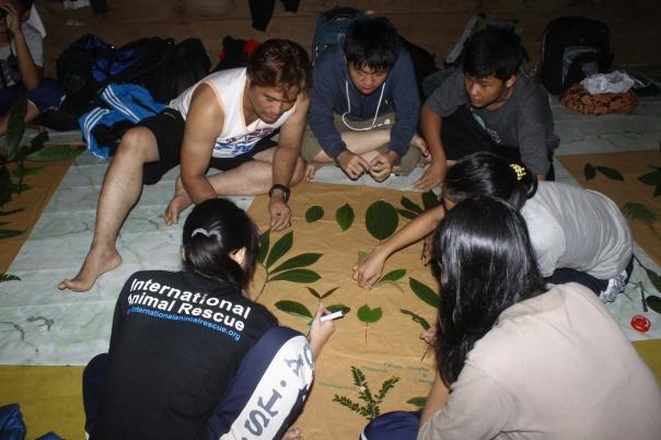 Belajar Taksonomi tumbuhan_2