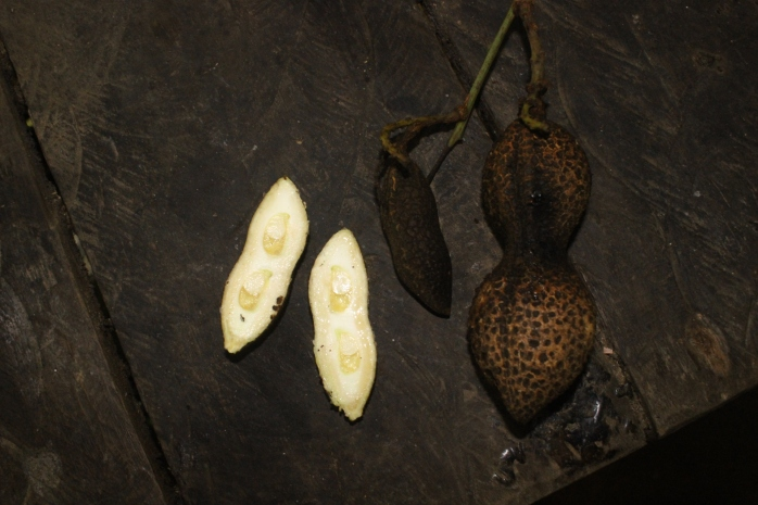 Connarus sp (Belungai)