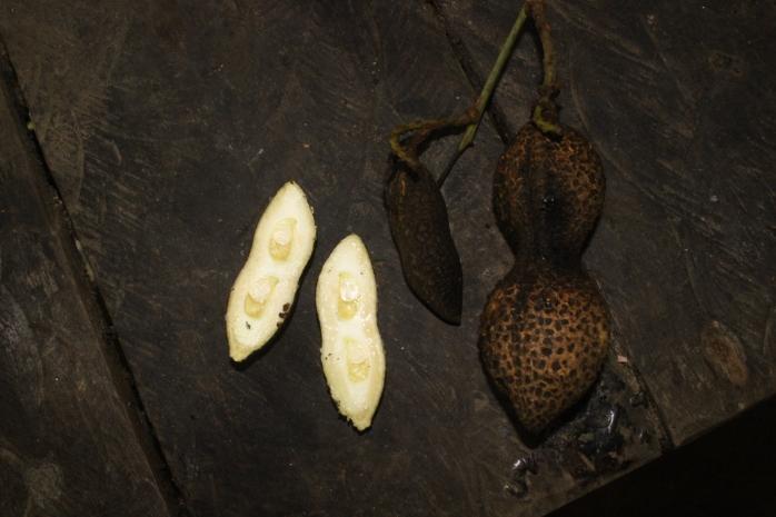 Connarus sp (Belungai)