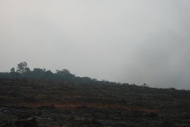 sisa-sisa-pembersihan-lahan-land-clearing-dan-selanjutnya-di-atau-ter-bakar-foto-dok-yayasan-palung-568dfcedb17e61410783dd77
