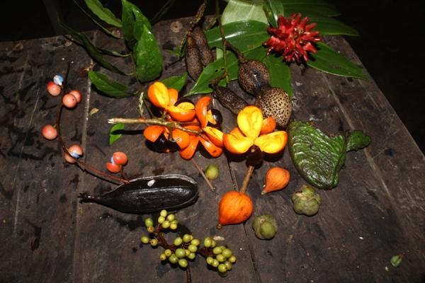 ragam-buah-buahan-hutan-yang-menjadi-kesukaan-orangutan-dan-burung-enggang-foto-dok-yayasan-palung-5673935ab17e610e0737a6c7