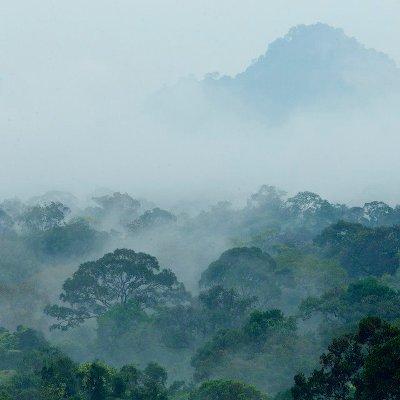 Foggy morning (Pagi berkabut) di Taman Nasional Gunung Palung. Foto dok. Tim Laman, Yayasan Palung