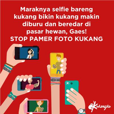 stop-berfoto-selfie-bareng-binatang-dilindungi-foto-dok-kukangku