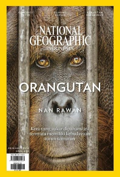 orangutan-nan-rawan-foto-capture-sampul-majalah-natgeo-indonesia