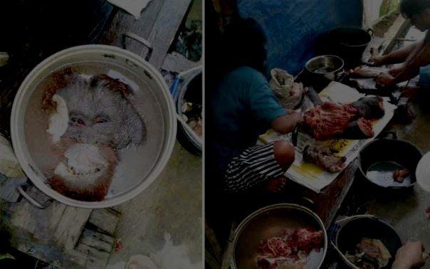 orangutan-yang-dibunuh-dan-di-konsumsi-oleh-pemburu-borneonews_-roni-sahala