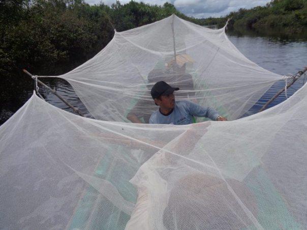 Melindungi diri dengan kelambu saat panen lebah madu. Foto dok. Yayasan Palung