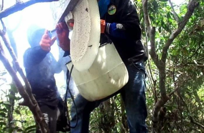 Saat melakukan pemanenan lebah madu. Foto dok. Yayasan Palung