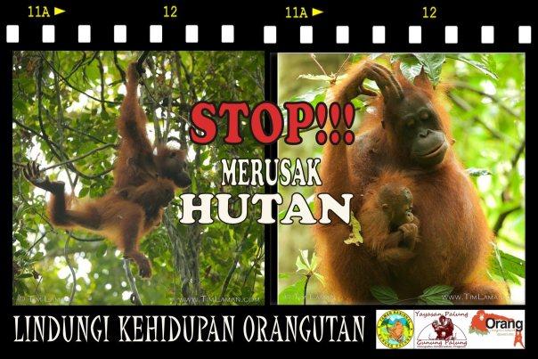 Stop!!! Merusak Hutan, Lindungi Kehidupan Orangutan. Foto dok. Yayasan Palung