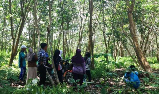 Peserta pelatihan mengunjungi kebun karet warga masyarakat di Desa Padu Banjar. Foto dok. Yayasan Palung.JPG