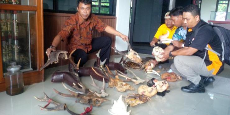 Petugas BKSDA Kalimantan Barat menunjukkan barang bukti yang disita dari sebuah toko aksesoris di Singkawang, Kalbar 22 April 2016 tahun lalu. Foto dok. KOMPAS.com, YOHANES KURNIA IRAWAN.jpg