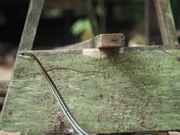 little snake.JPG