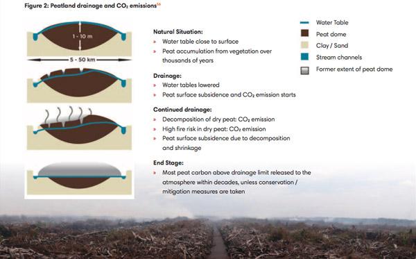 Ilustrasi drainase kubah lahan gambut via mongabay Indonesia, Sumber_ RAN