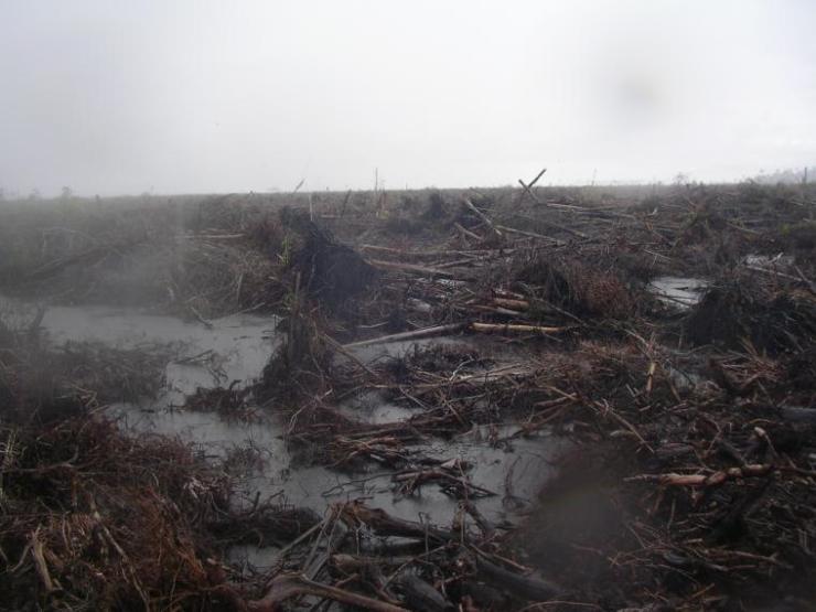Setidaknya Ini Penyebab Deforestasi Hutan, lebih khusus lahan gambut di Indonesia dan Dampaknya. Foto dok. Yayasan Palung