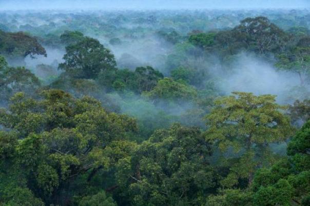 Hutan sebagai sumber hidup makhluk hidup. Foto dok. Yayasan Palung