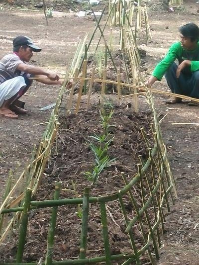 Salah satu Kelompok terlihat memagari tanaman mereka setelah sebelumnya menanamnya. Foto dok. Yayasan Palung.jpeg