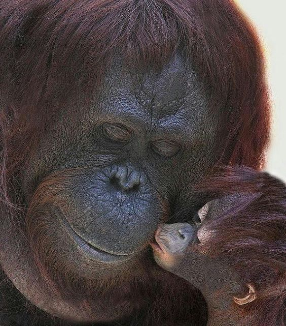 baby kiss sweets. Foto dok. Tim Laman
