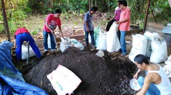 Petani mengolah pupuk organik untuk menggantikan pupuk yang mengandung bahan kimia, juga sebagai efesiensi biaya pertanian. Foto dok. Yayasan Palung