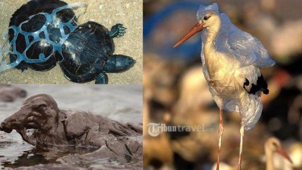 Berbahaya, hewan bisa sengsara atau bahkan mati karena sampah. Foto dok. tribun travel