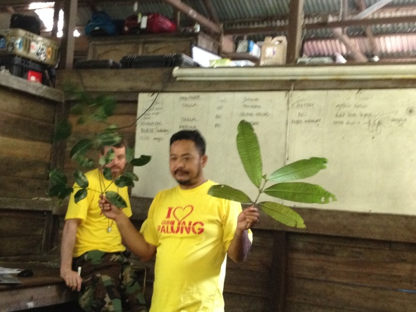 Foto Materi Identifikasi Tumbuhan Field Course di Gunung Palung (3)