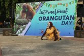 International Orangutan Day 2019